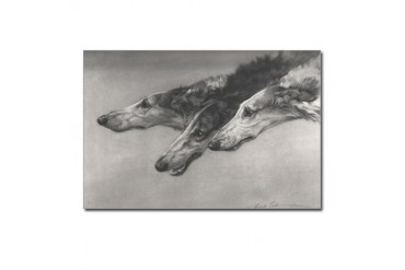 Maud Earl's Borzoi II Postcards Borzoi Postcards Package of 8 by CafePress