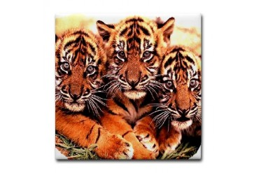 White Tiger - Bengal Tiger Military Tile Coaster by CafePress
