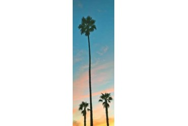 Sunset Palms Poster Print by Gail Peck (12 x 36)