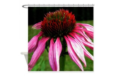 .echinacea. Nature Shower Curtain by CafePress