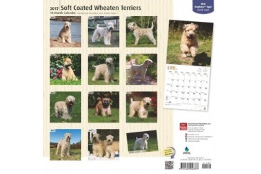 Soft Coated Wheaten Terriers Wall Calendar