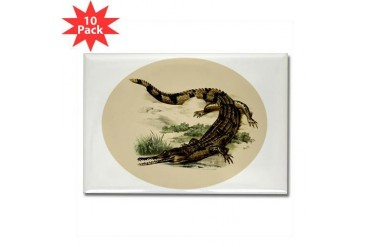Vintage Caiman Vintage Rectangle Magnet 10 pack by CafePress