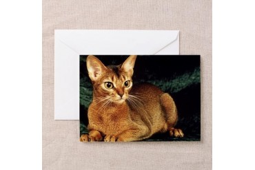 Ruddy Abyssinian Cat Greeting Cards 6 Friends Greeting Cards Pk of 10 by CafePress
