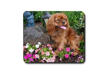 Cavalier King Charles Spaniel Pets Mousepad by CafePress