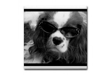 Movie Star Cavalier Funny Tile Coaster by CafePress