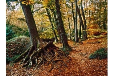 Trees with granite rock at Huelgoat forest in autumn, Finistere,