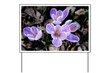 Pickwick Crocus Flowers Flowers Yard Sign by CafePress