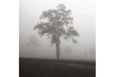 Fog Tree Study I Poster Print by Jamie Cook (24 x 24)