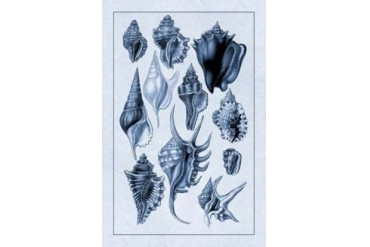 Shells Trachelipoda #5 (Blue) Poster Print by G.B. Sowerby (24 x 36)