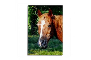Sassy Horse Head Horse Rectangle Magnet by CafePress