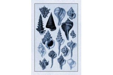 Shells Trachelipoda #4 (Blue) Poster Print by G.B. Sowerby (24 x 36)
