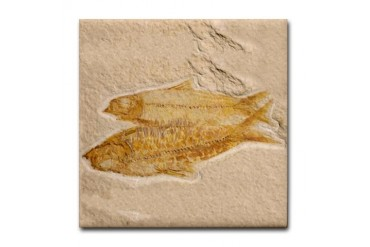 Fossil Image Art Tile Coaster 2 Fish