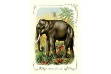 The Elephant 1900 Poster Print by Unknown (12 x 18)