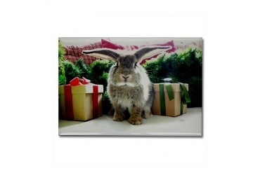 Cute rabbit gifts Pets Rectangle Magnet by CafePress