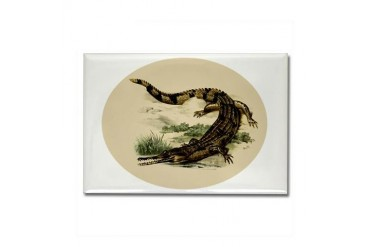 Vintage Caiman Vintage Rectangle Magnet by CafePress