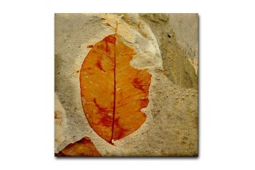 Red Amber Leaf Fossil Tile Coaster