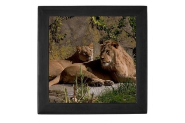 Lions SF Photography Keepsake Box by CafePress