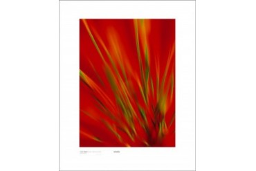 Flexi Grass, Bright Green On Red Print by Michael Banks