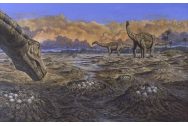 Titanosaur nesting site, Mid-Cretaceous Period of South America..