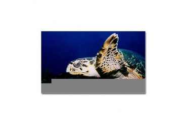 Sea Turtle Sticker Rectangular Turtle Sticker Rectangle by CafePress