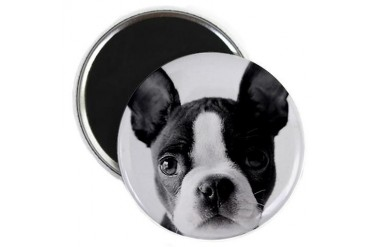Lucy The Boston Terrier Boston terrier Magnet by CafePress
