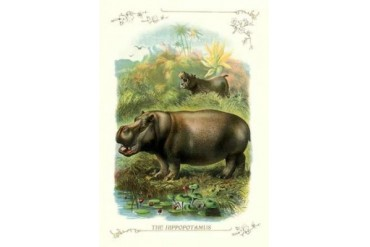 The Hippopotamus 1900 Poster Print by Unknown (24 x 36)