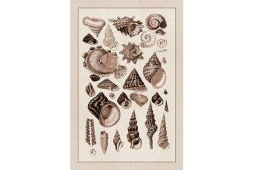 Shells Trachelipoda #3 (Sepia) Poster Print by G.B. Sowerby (24 x 36)