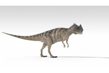 Ceratosaurus dinosaur, white background.