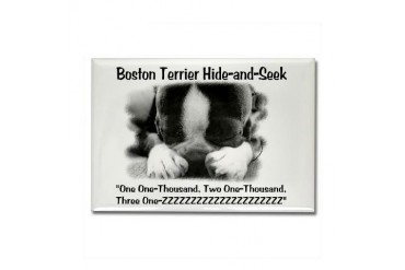 Boston Hide and Seek Dog Rectangle Magnet by CafePress
